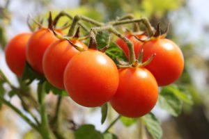 cherry tomato recipes